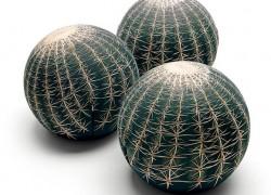 Canapé Cactus sofa