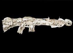 Gun replica made from animal bones