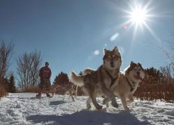 Europe – Husky sledding