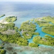 "Selling an island-today ""Montego Caye"""
